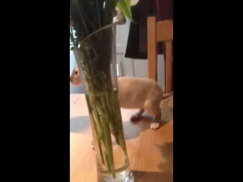 Leah playing with flowers