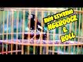 Anis Kembang Ngeplong Roll Speed  Mp3 - Mp4 Download
