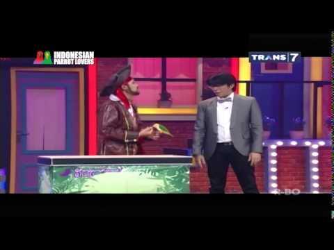 Indonesian Parrot Lovers ( Trans 7 panggung komedi )