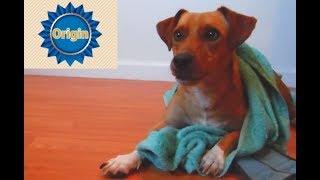 Origin Dog Food (Pedigree Dog Food Parody)