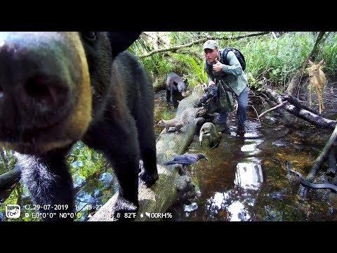Owlzer Z1 Trail Camera Pickup