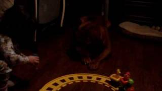 Dogue De Bordeaux Eats Toy Train