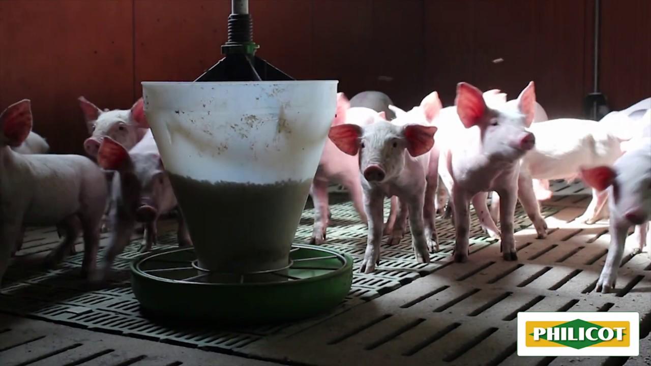 Download Pour votre élevage porcin