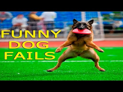 Funny Dogs – Funny Dog Fails – Funny Dogs Compilation – Funny Animals Compilation