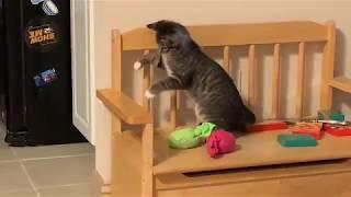 Домашние Животные. Котёнок в доме !