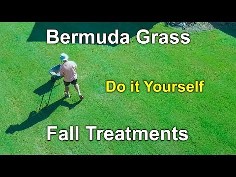 Bermuda Gr Fall Treatments And Care