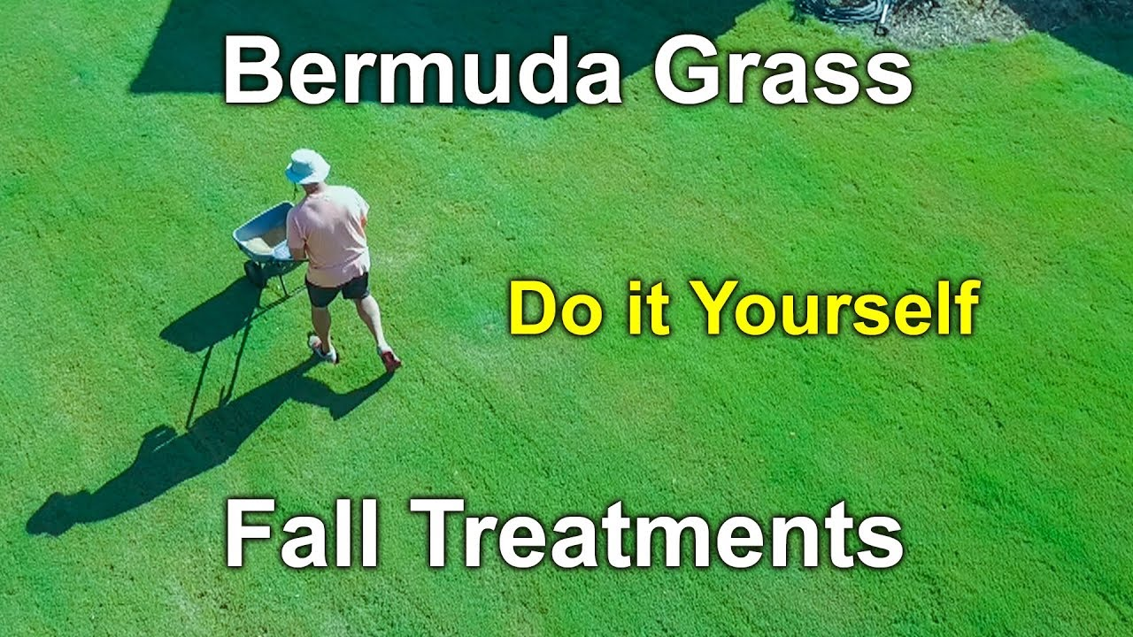 Bermuda grass fall treatments and care youtube bermuda grass fall treatments and care solutioingenieria Gallery