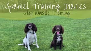 Gundog Training  The Stop Whistle