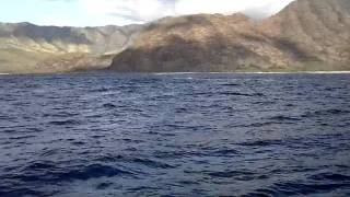 Whales playing outside of Waianae, Oahu
