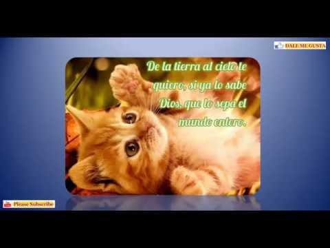 Imagenes De Gatitos Tiernos Con Frases De Amor Youtube