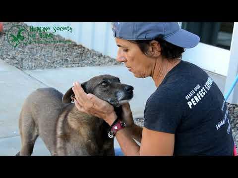 Humane Society of Yuma's Volunteers