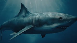 10 Megalodon Sightings Caught On Camera & Spotted In Real Life!