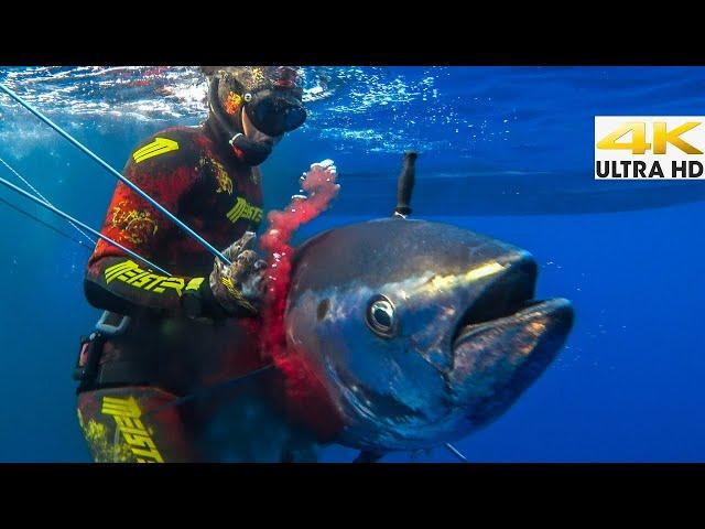 Spearfishing 🇬🇷 | ULTIMATE FATTY BLUEFIN TUNA🔪Catch Clean Cook [4Κ]✅