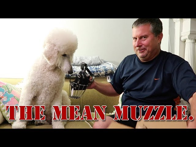 The Mean Muzzle