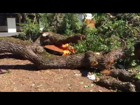 Large tree branch falls in Menlo Park