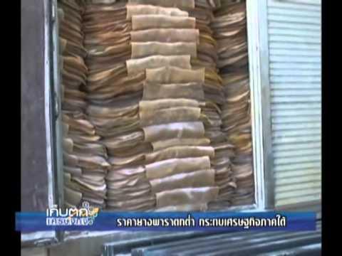 Nation channel : ราคายางพาราตกต่ำ กระทบเศรษฐกิจภาคใต้ 30/4/2557