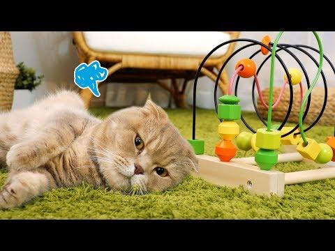 장난감 뺏어서 삐친 고양이 이즈