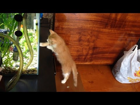 Cats and Fish 😻🐠 Funny Cats Trying To Catch The Fish (Full) [Funny Pets]