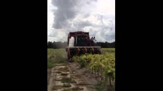 Cotton pickin' tobacco harvester