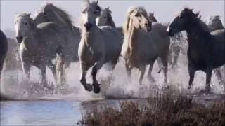 Spirit Animal ~ Horse ~Native American Music -Niall