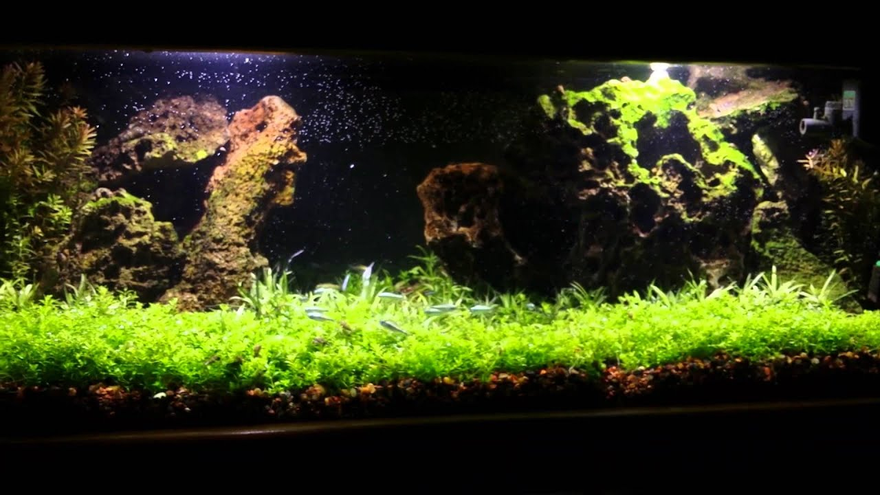 20 gallon long planted fish tank first youtube showing for Youtube fish tank
