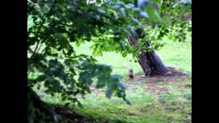 Белки на Елагином острове в Питере
