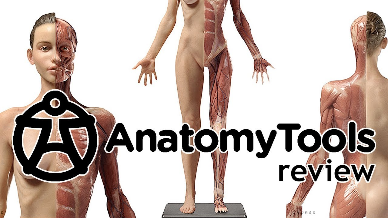 Review - Anatomy Tools : Male / Female figures v1A - YouTube
