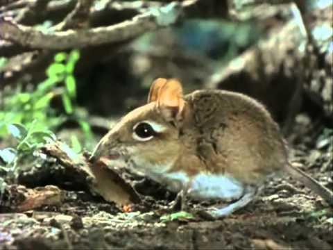 naturaleza-fauna-flora-africa-el-paraiso-del-espino-national-geographic-5