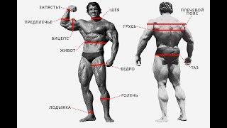 Атлетическое телосложение и Тестостерон Что нужно качать обязательно