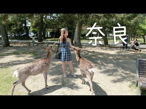 🌞日本大阪之旅自由行第1集🐂🌲奈良