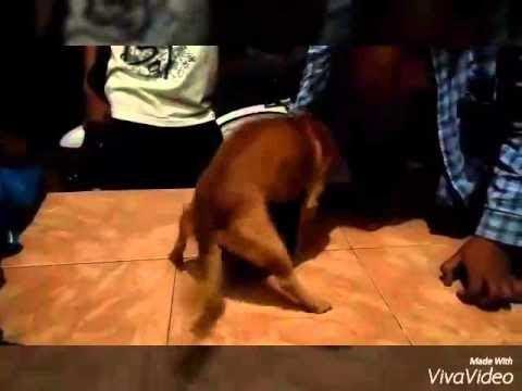 Anjing Pemain Film Porno Full HD