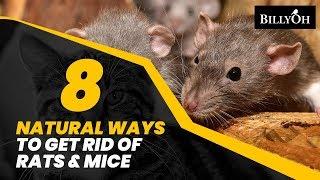 Mice control home remedies