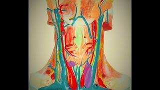 Эктопия тимуса в щитовидную железу на УЗИ