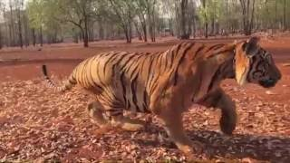 pulimurugan malayalam movie stunt making video with tiger peter hein mohanlal