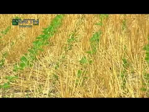 Battini Agri Informa 25/2015: La soia su sodo
