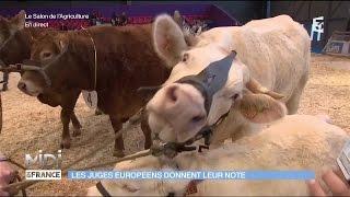 ANIMAUX : Les juges Européens donnent leur note