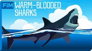 How Cold-Blooded Sharks achieved Warm-Bloodedness