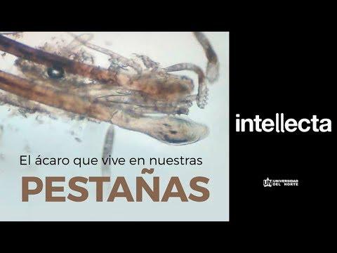parasito que vive en las pestañas