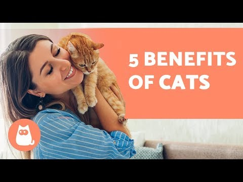 5 BENEFITS Of Having A CAT 😻 For Health And Happiness