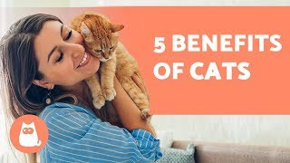 5 BENEFITS of Having a CAT  For Health and Happiness