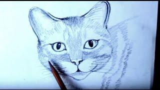 КАК НАРИСОВАТЬ КОШКУ КАРАНДАШОМ ПОЭТАПНО(В этом обучающем видео рассказывается как нарисовать кошку карандашом. Все действия показаны поэтапно,..., 2015-10-21T07:24:57.000Z)