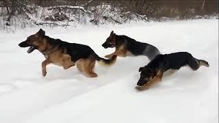 BE CAREFULL - FASTEST DOGS COMPILATION !!!YUBITUBI