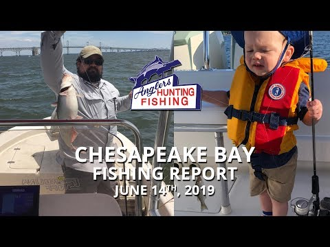Chesapeake Bay Fishing - June 14th, 2019