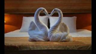 Towel Animal Theater : Swan OCS Orlando Transportation
