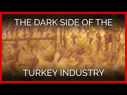 The Dark Side of the Turkey Industry