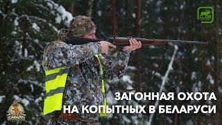 Загонная охота на копытных в Беларуси