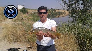 Pesca de Carpa en el Embalse de Castrejon  - Junio 2014