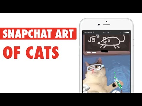 Snapcat || Artist's Cool Snapchat Cats