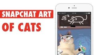 Snapcat || Artist's Cool Snapchat Cats