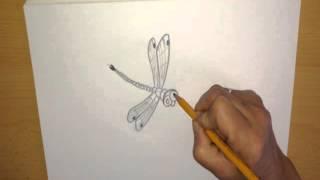 СТРЕКОЗА, Рисунки карандашом, Насекомые, Draw a picture, Sketch paint, Art